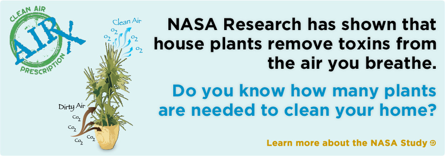 Alpha Botanical - NASA research shows that plants remove toxins from the air you breathe